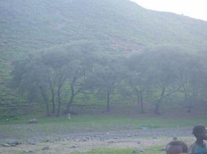 Reforestation in Bette